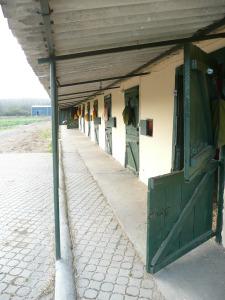 Hästboxar